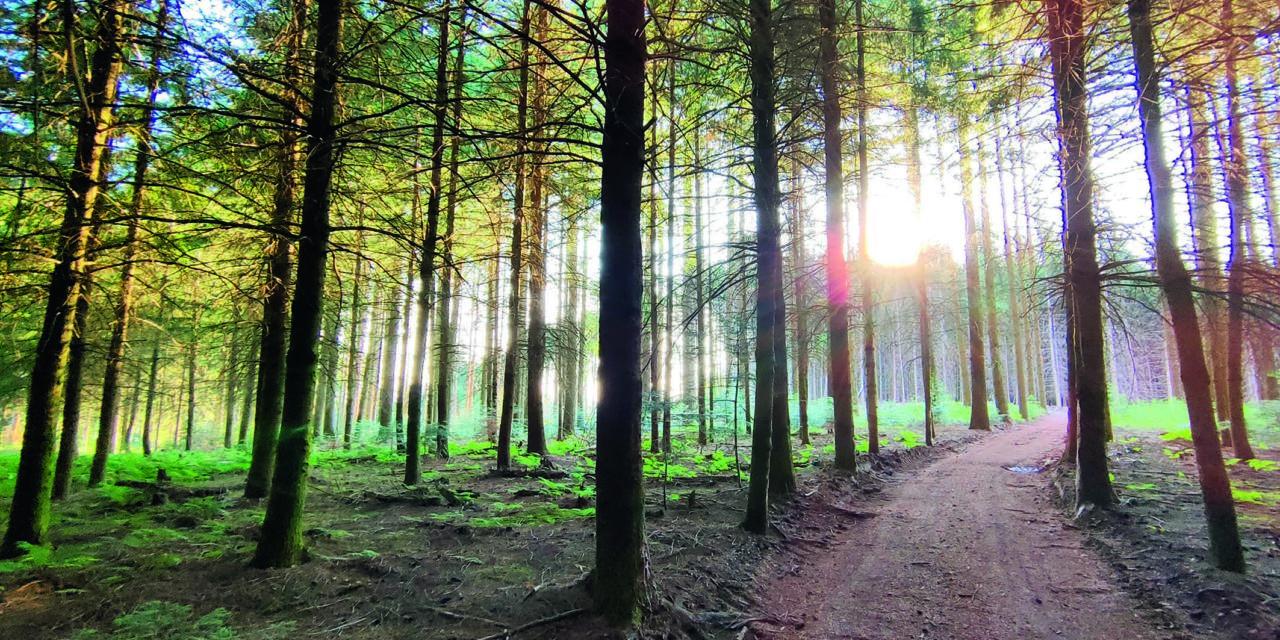 Marche nocturne et bain de forêt